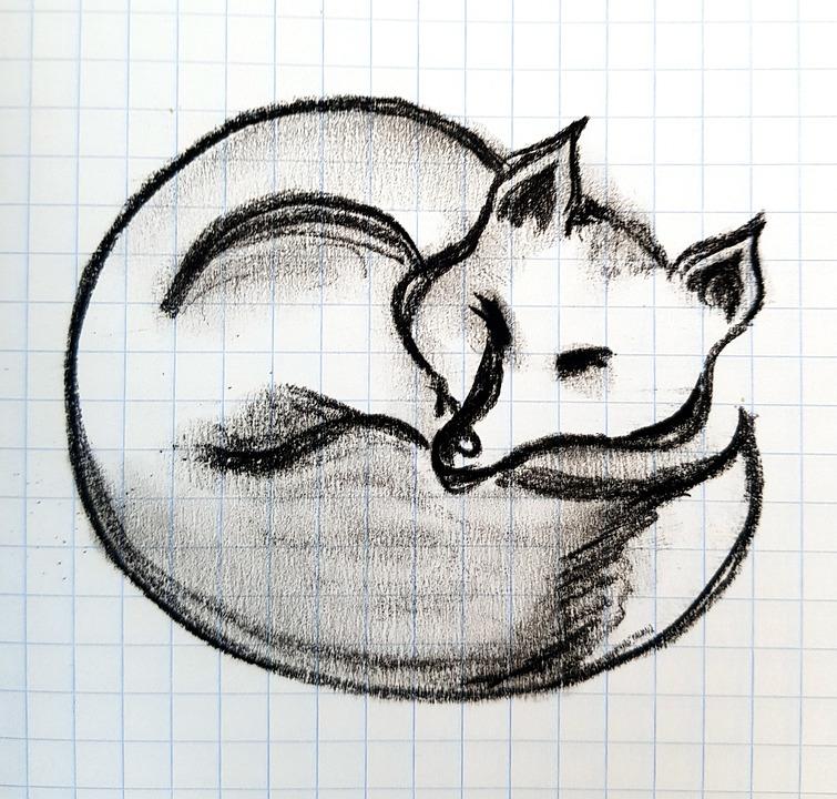 Fox, Sketch, Pencil, Figure, Letter, Sleep, Drawing