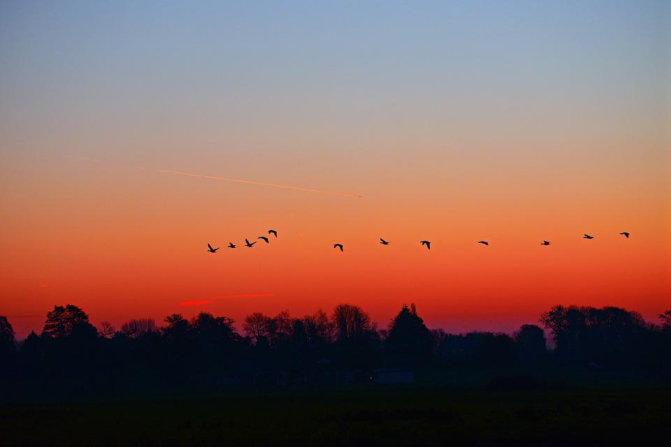Dawn, Sunrise, Early Morning, Skies, Birds, Silhouettes