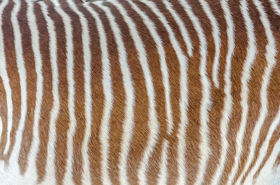 Skin, Zebra, Striped, White, Brown, Hair