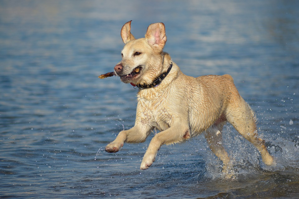 Dog, Vitality, Pet, Energy, Game, Skip