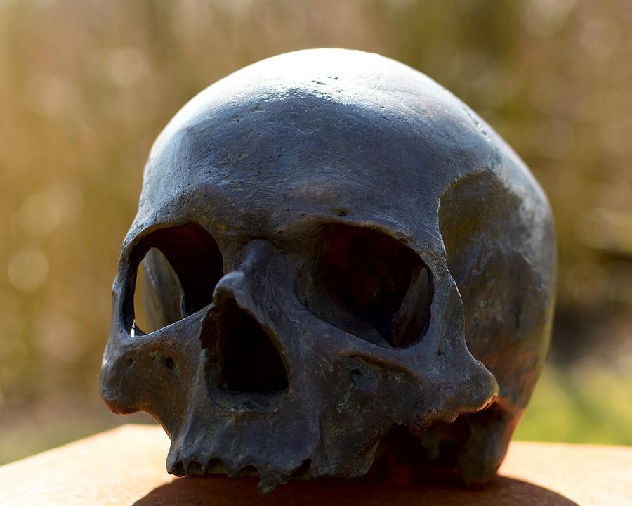 Free Photo Skull Face Skull And Crossbones Head Human Bones Max Pixel