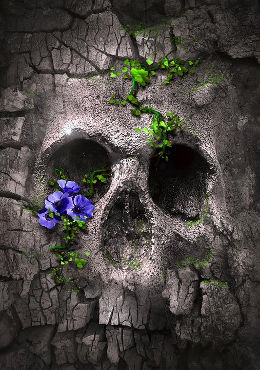 Book Cover, Fantasy, Skull, Skull And Crossbones