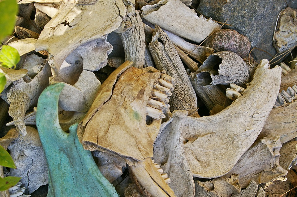 Bone Fund, Excavations, Skull, Skeleton, Death, Head