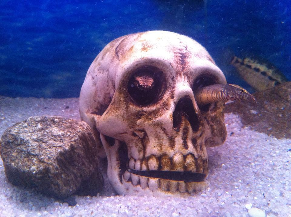 Aquarium, Skull, Fish, Underwater, Nature