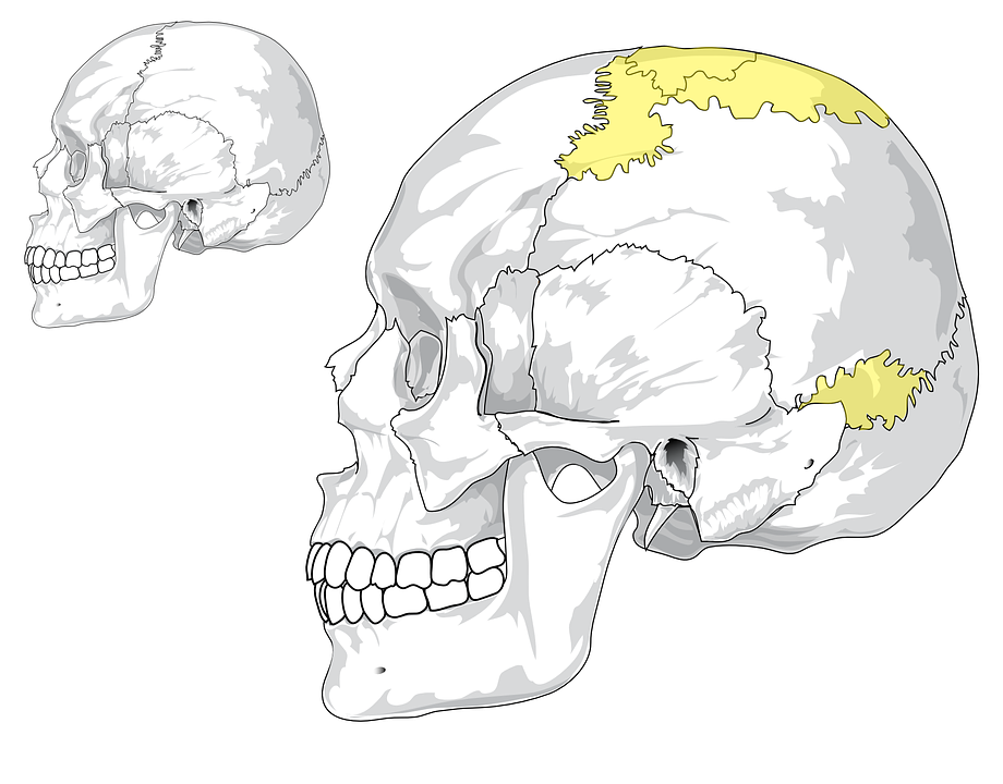 Skull, Human, Cranium, Skulls, Spooky, Scary, Horror