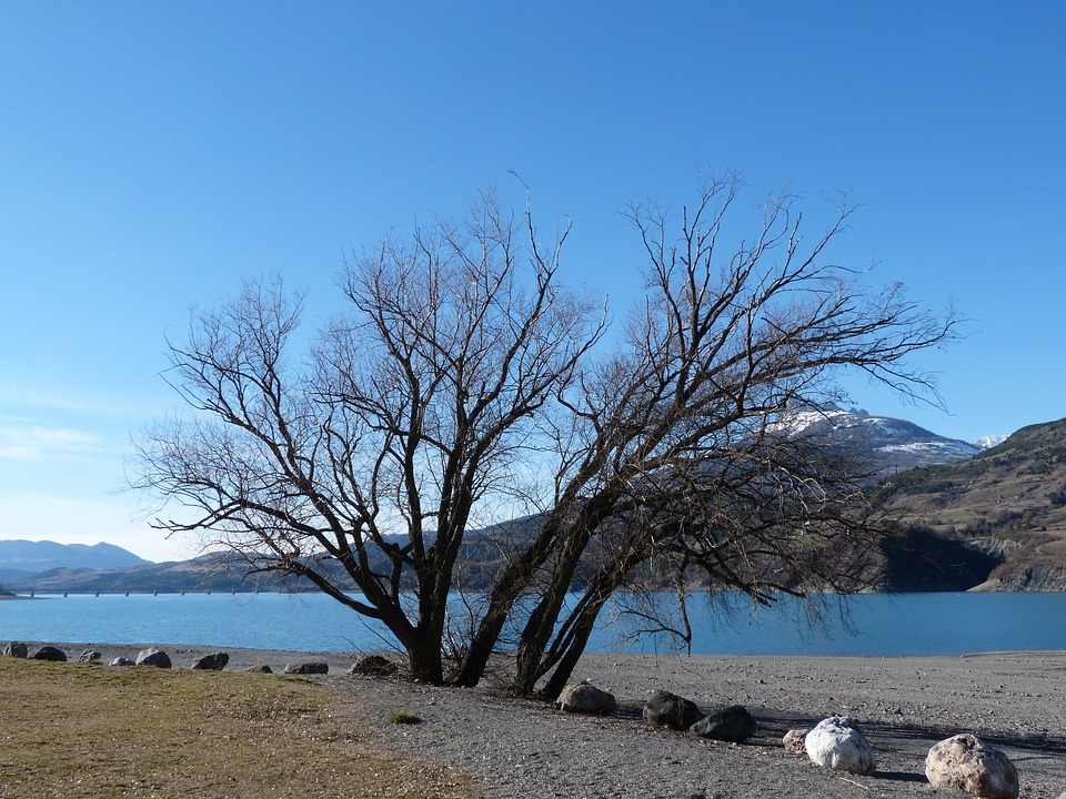 Tree, Lake, Mountain, Sky, Blue, Landscape, Alps