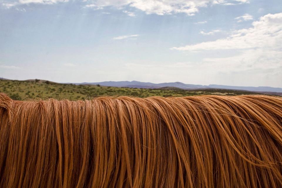 Horse, Mane, Animal, Hair, Horizon, Sky, Nature