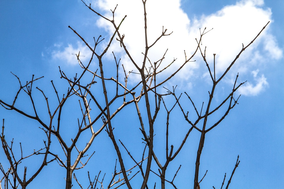 Twigs, Backlit, Sky