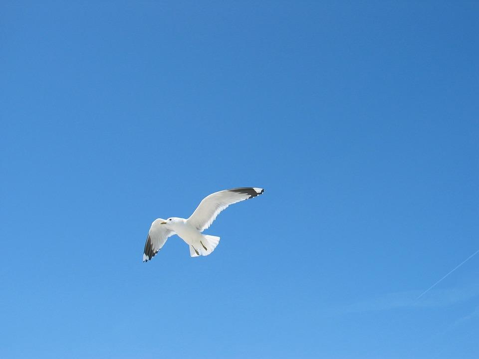 Sky, Seagull, Blue, Bird, Baltic Sea