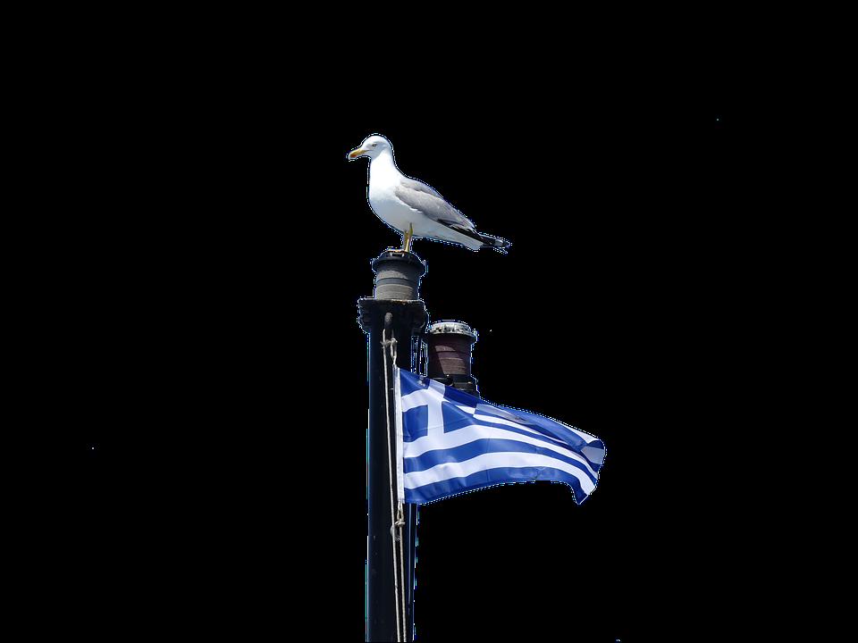 Isolated, Bird, Sky, Travel, Seagull, Greece, Halkidiki
