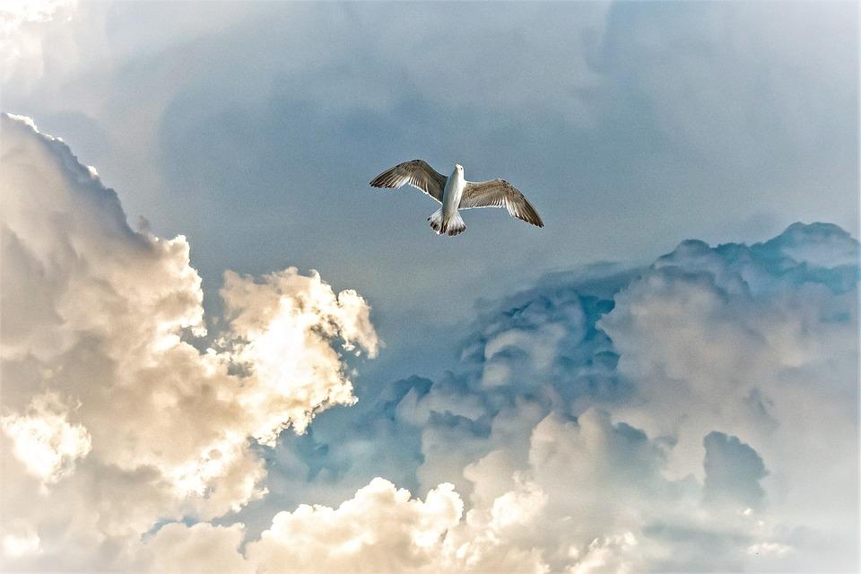 Clouds, Thunderstorm, Seagull, Bird, Seevogel, Sky