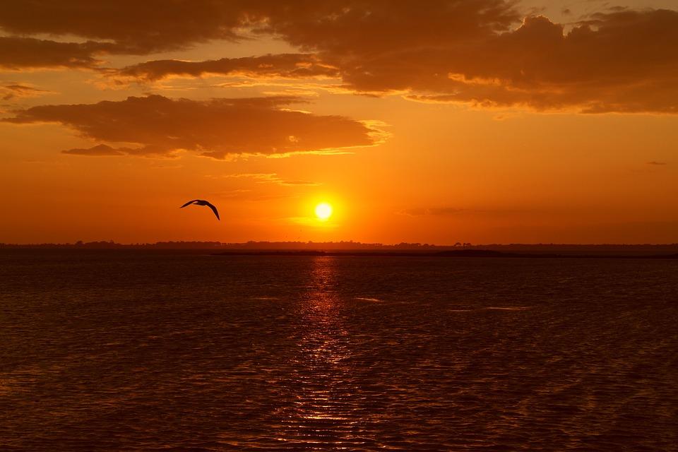 Sunset, Orbetello, Bird, Sun, Sky