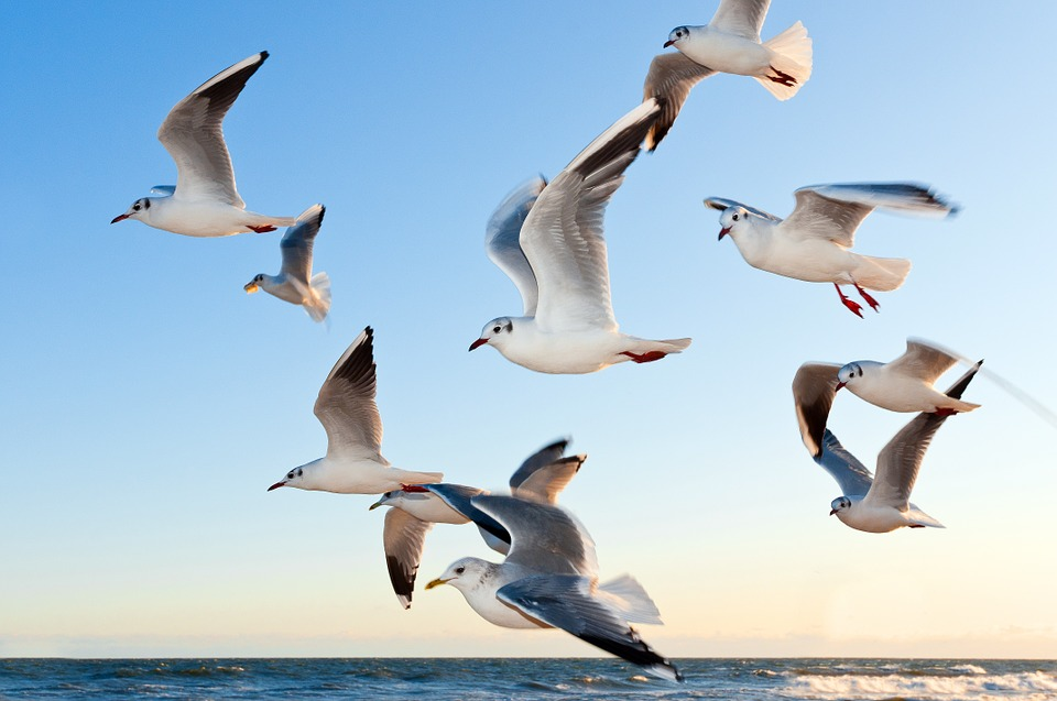 Gulls, Bird, Flying, Sea, Sky, Water, Water Bird