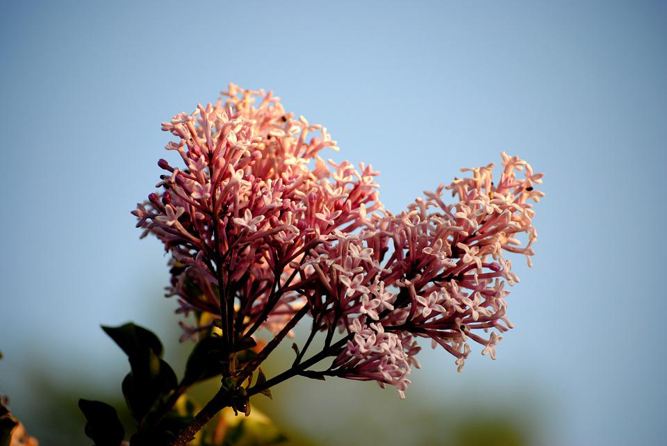 Flowers, Spring, Sky, Summer, Garden, Bloom