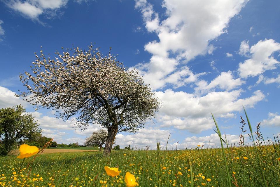 Landscape, Nature, Sky, Meadow, Tree, Blossom, Spring