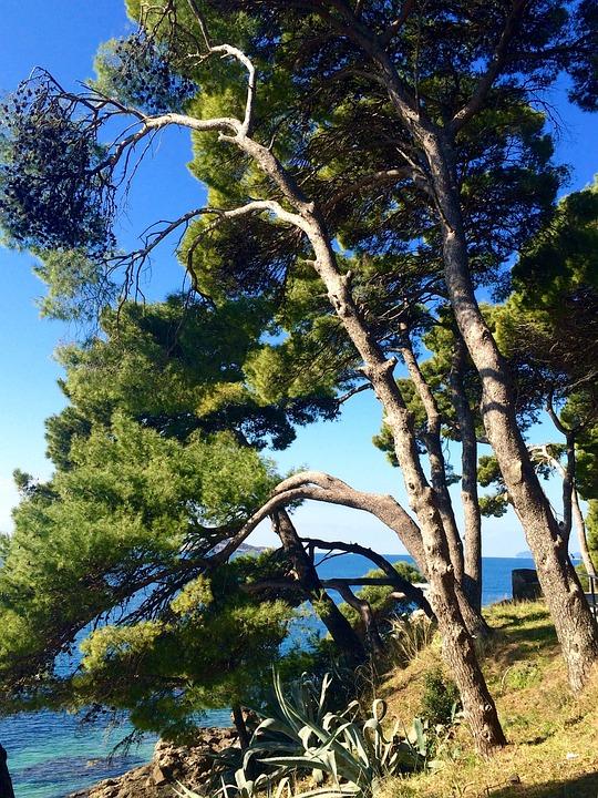 Cavtat, Croatia, Pine Tree, Sea, Blue, Sky, Sunny