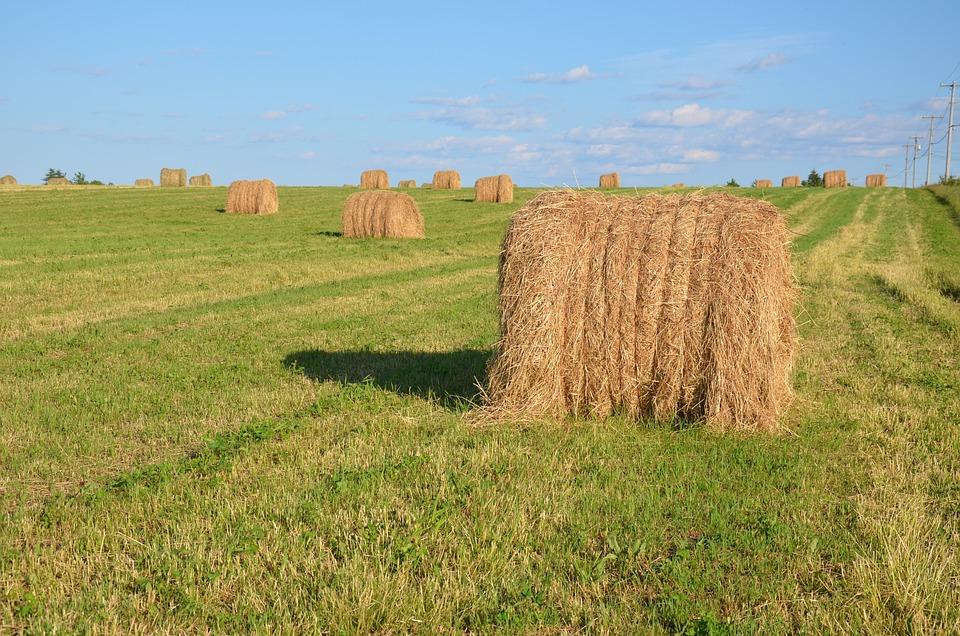 Rolls, Field, Straw, Clouds, Blue, Sky, Landscape