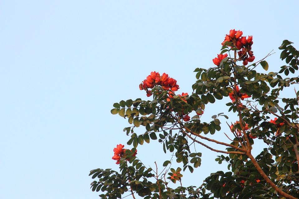 Tree, Branch, Nature, Season, Sky