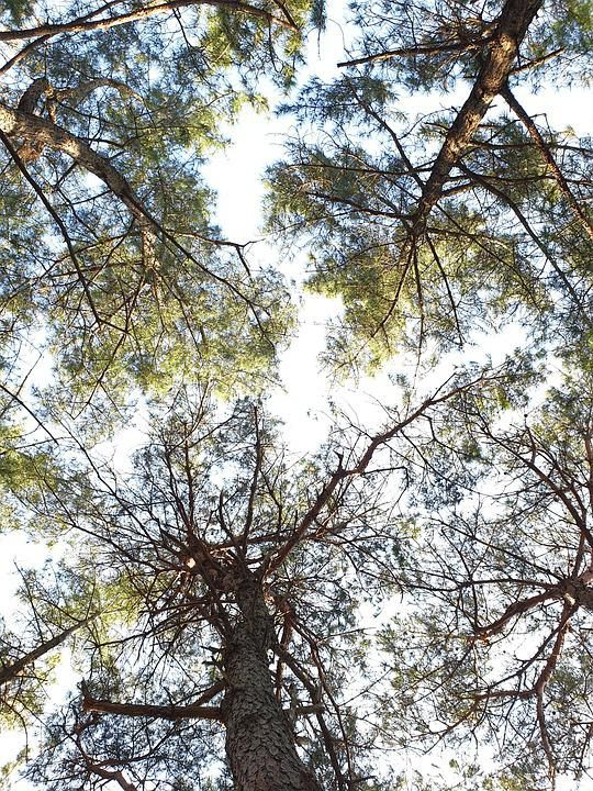 Trees, Leaves, Foliage, Branches, Perspective, Sky