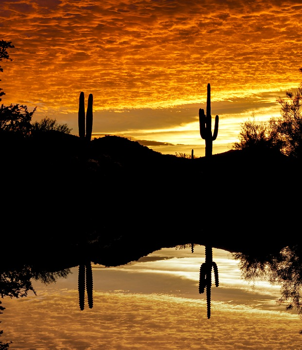 Cactus, Sunset, Sky, Reflection, Silhouette