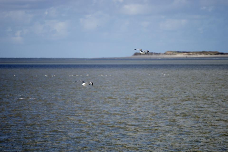 North Sea, Water, Sea, Sky, Clouds, Lake, Wadden Sea