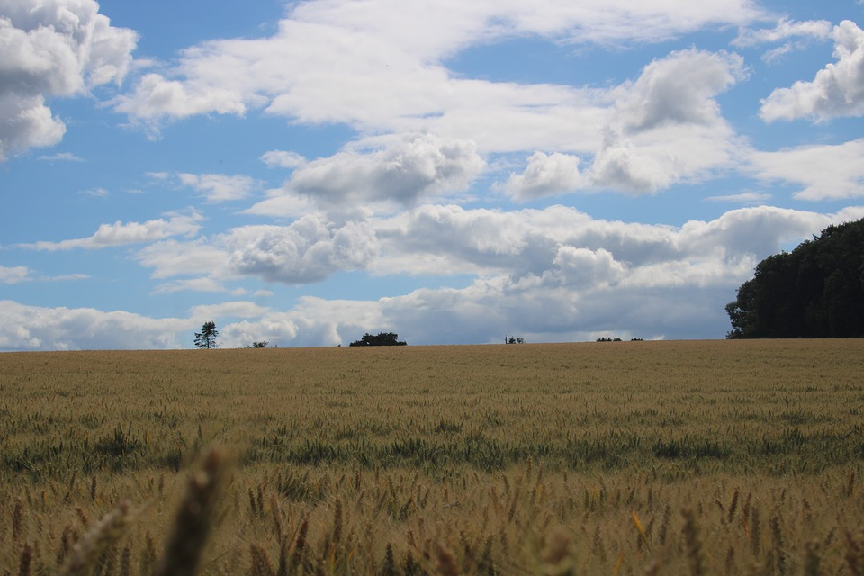 Summer, Sky, Clouds, Landscape, Field, Agriculture