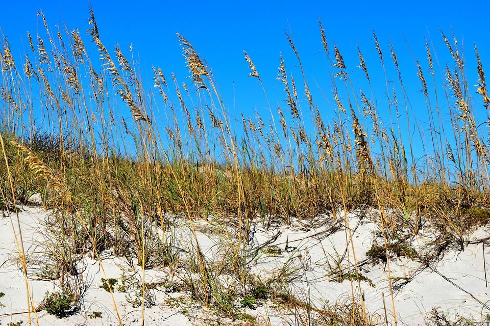 Sea Oats, Ocean, Sand Dunes, Beach, Nature, Sky, Coast