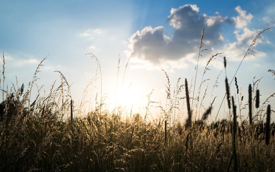 Cornfield, Cereals, Nature, Sky, Wheat, Spike, Field