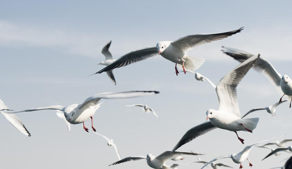 Seagulls, Birds, Blue, Sky, Nature, Outdoors, Day, Fly