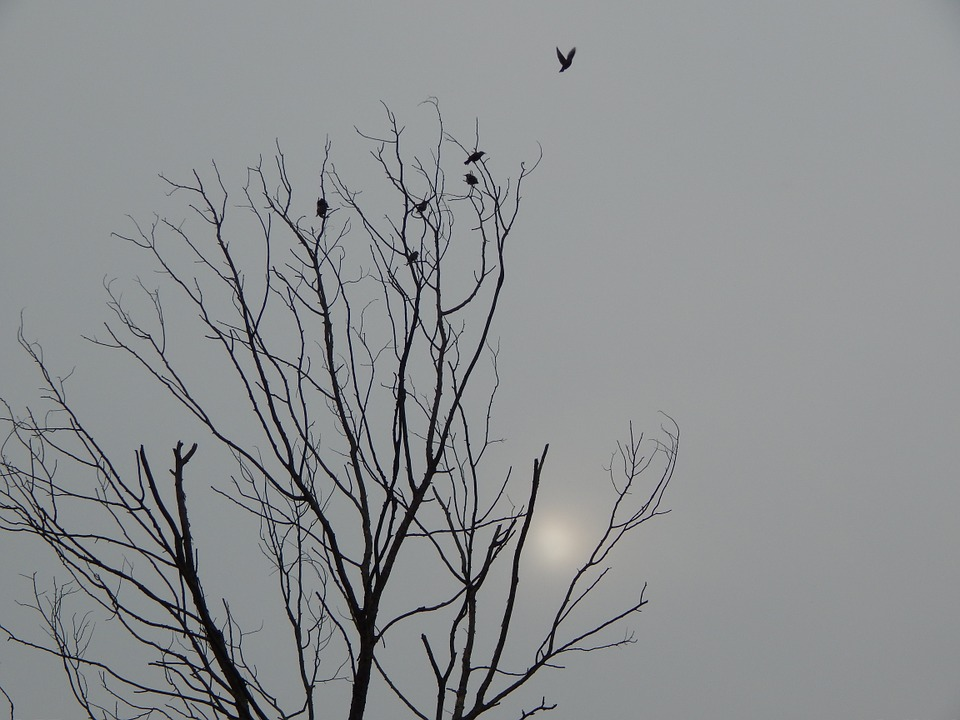 Black And White, Death Tree, Birds, Sky