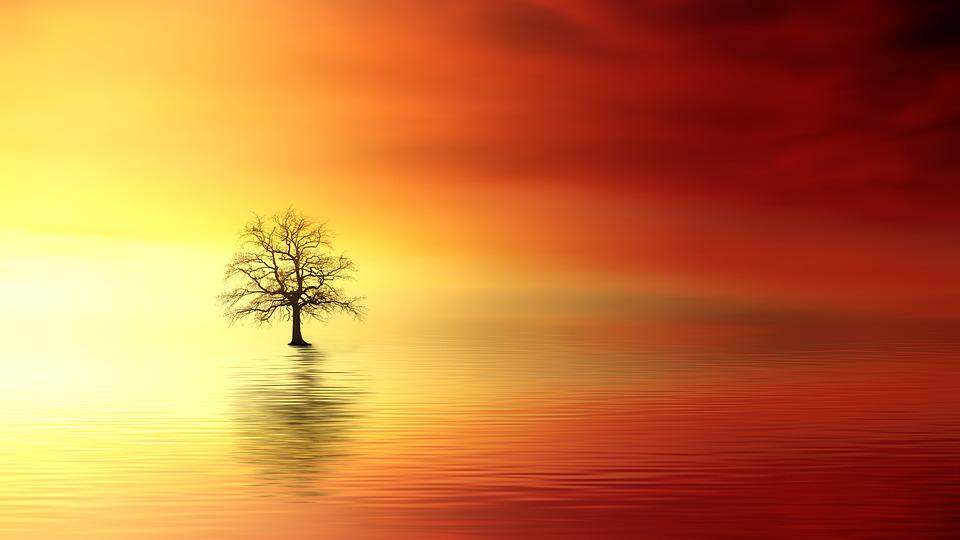Sunset, Tree, Dawn, Sun, Nature, Dusk, Evening, Sky
