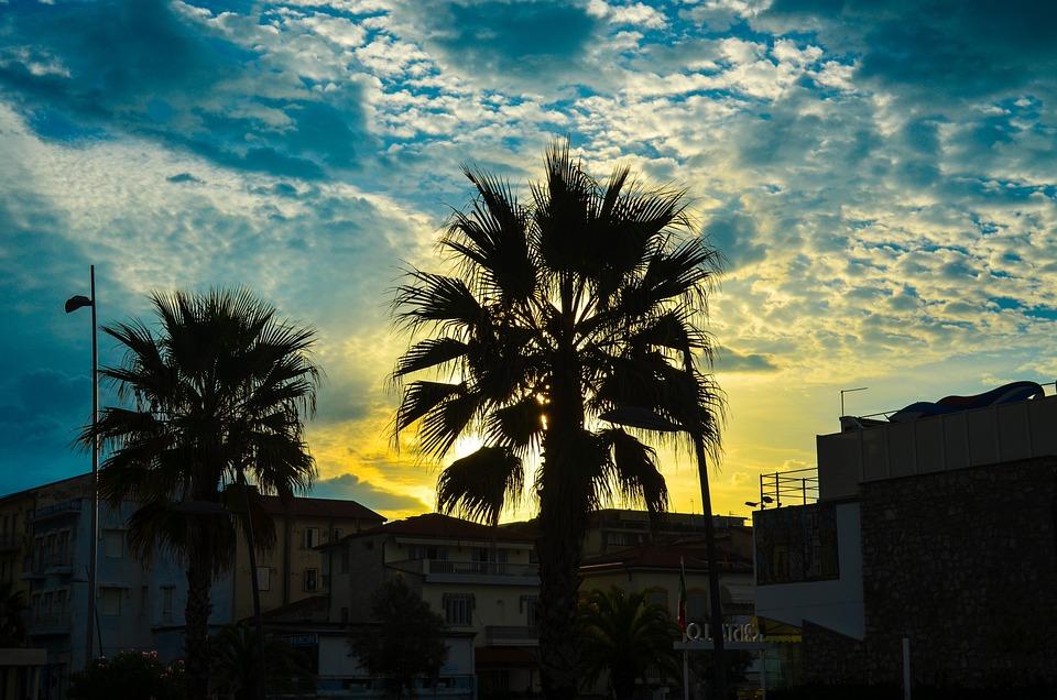 Palm, Sky, Cloud, Paradise, Exotic, Landscape, Evening