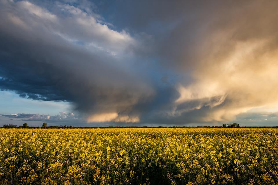 Sky, Rapeseeds, Storm Clouds, Field Of Rapeseeds