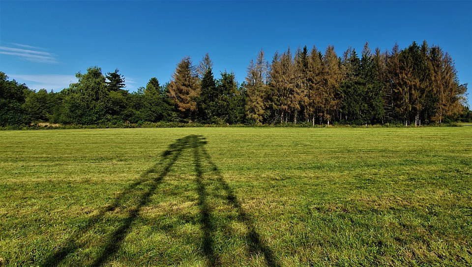 Shadow, Strommast, Sky, Trees, Blue, Brown, Field