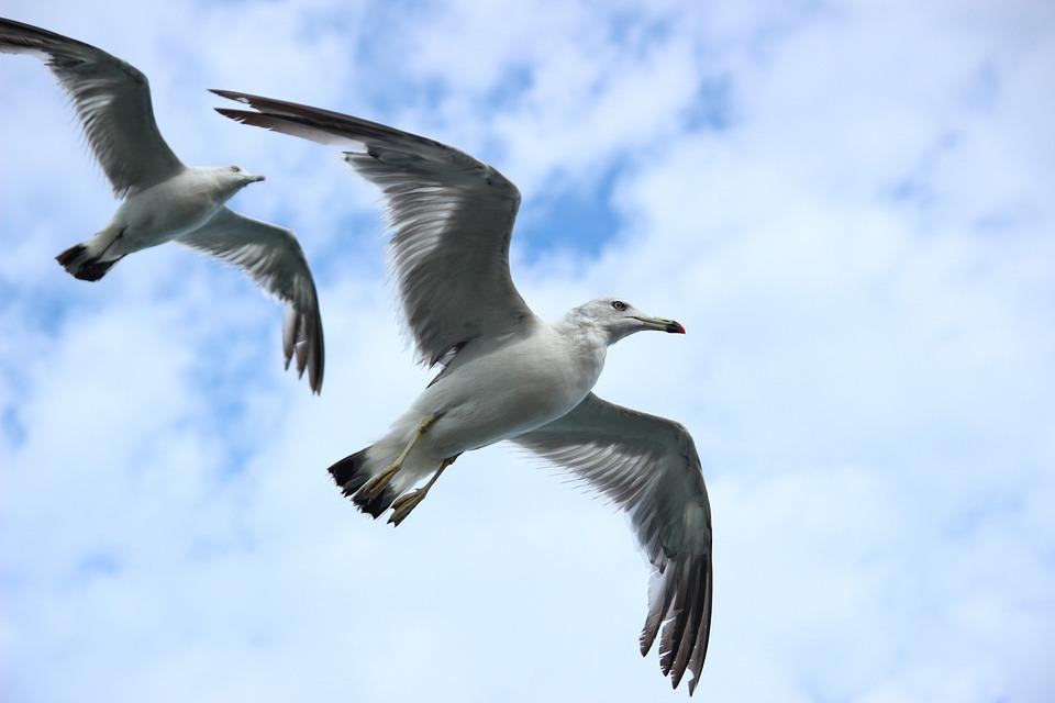 Seagull, New, Sea, Sky, Flight, Wing