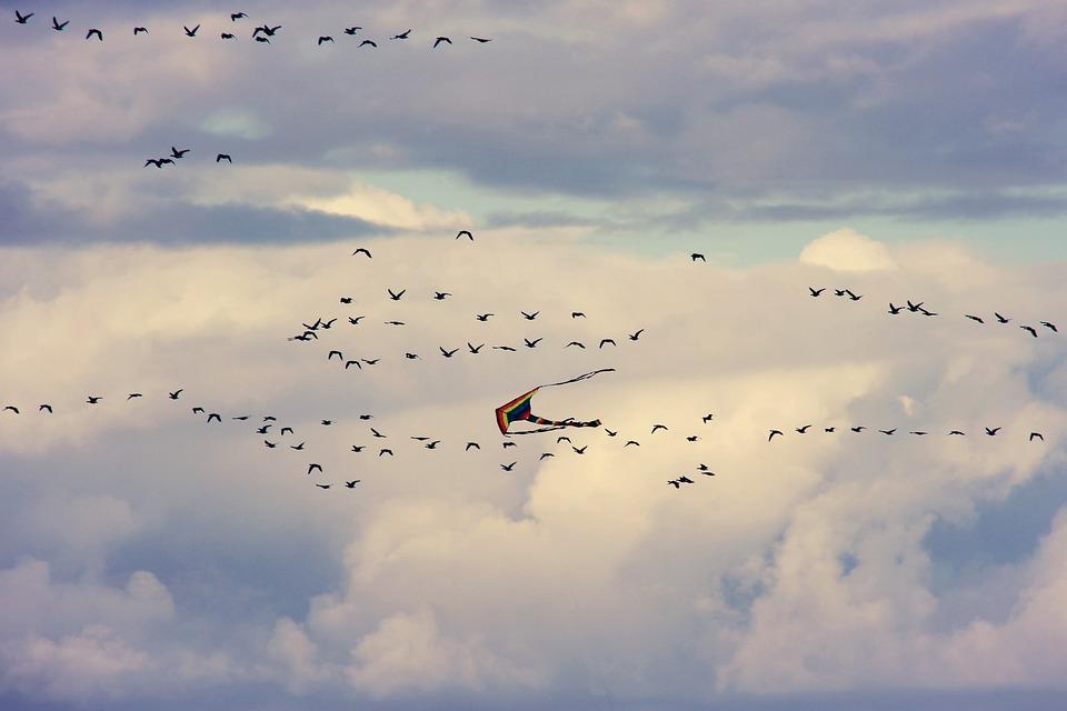 Dragons, Birds, Flying, Flock Of Birds, Sky, Sea, Bird