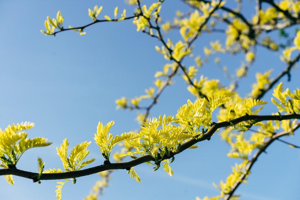 Yellow, Branch, Tree, Flower, Blossom, Bloom, Sky