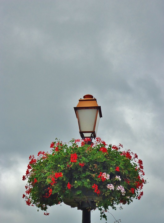 Floor Lamp, Flowers, Light, Sky, Nest