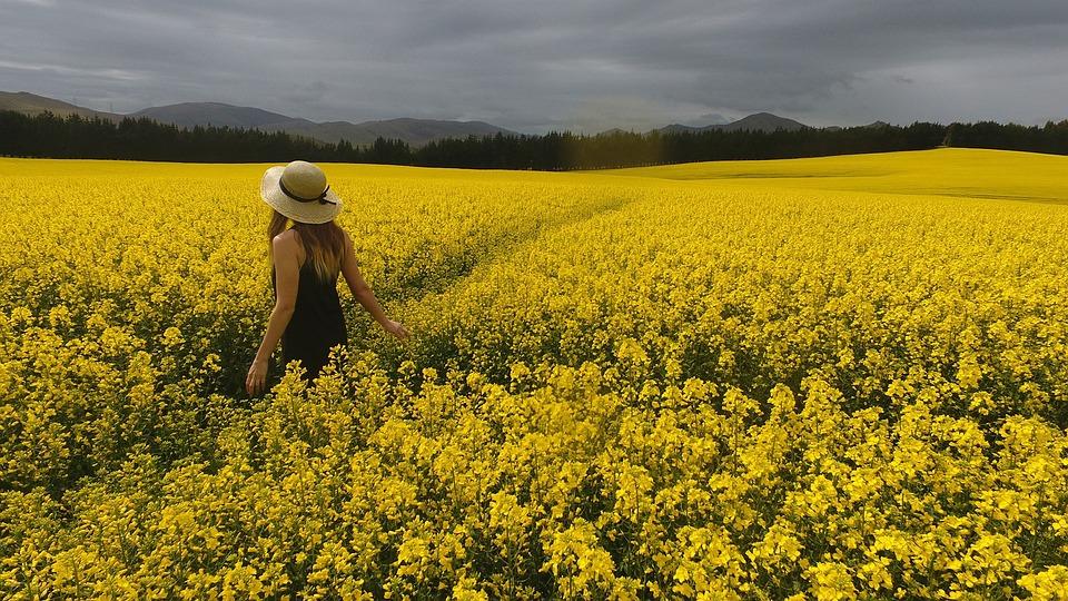 View, Yellow, Sky, Nature, Women, Summer, Girl, Flowers