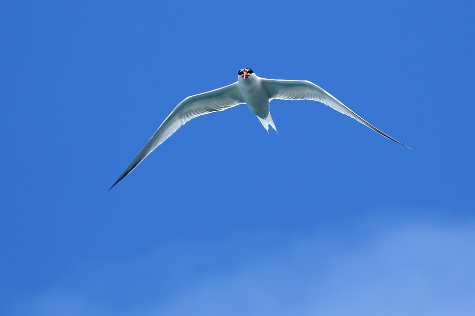 Seagull, Seagull In Flight, Flying Seagull, Sky, Bird