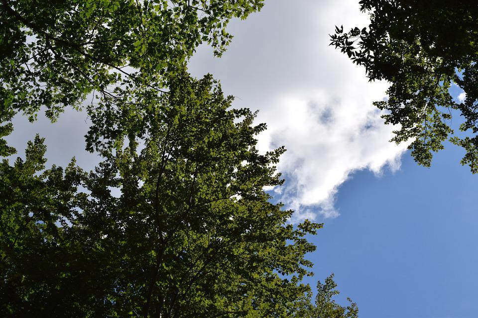 Sky, Forest, Clouds