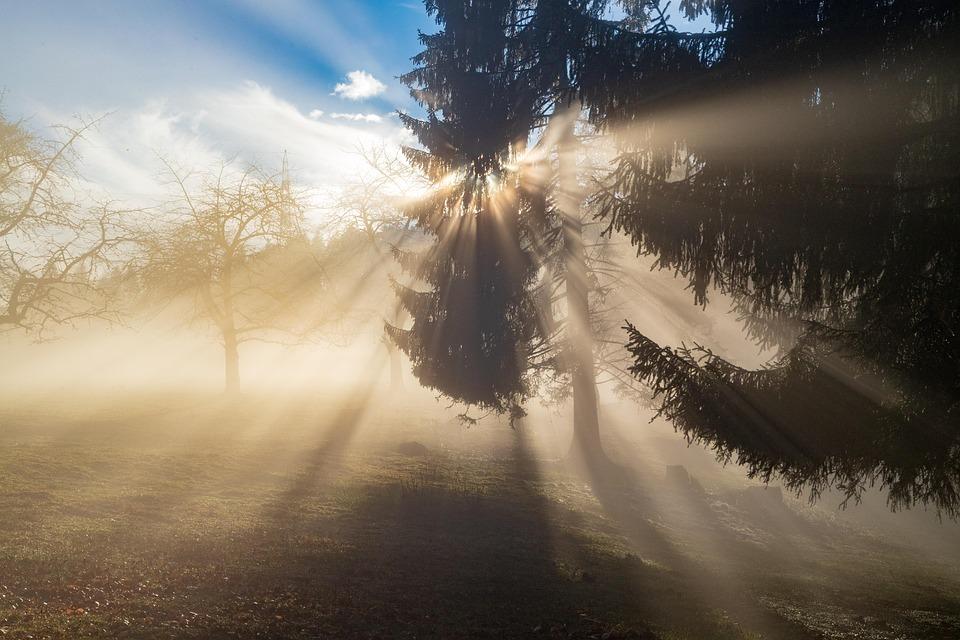 Rays, Sun, Light, Fog, Forest, Sky, Landscape, Sunbeam