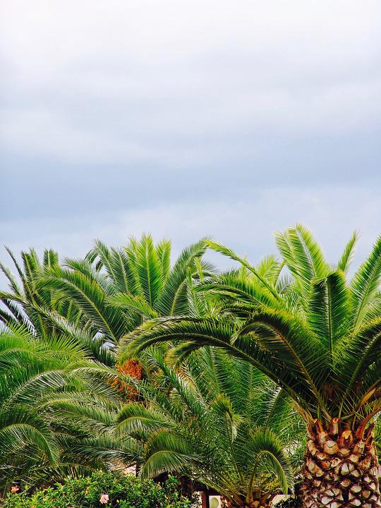 Palm, Sky, Tree, Forest, Summer