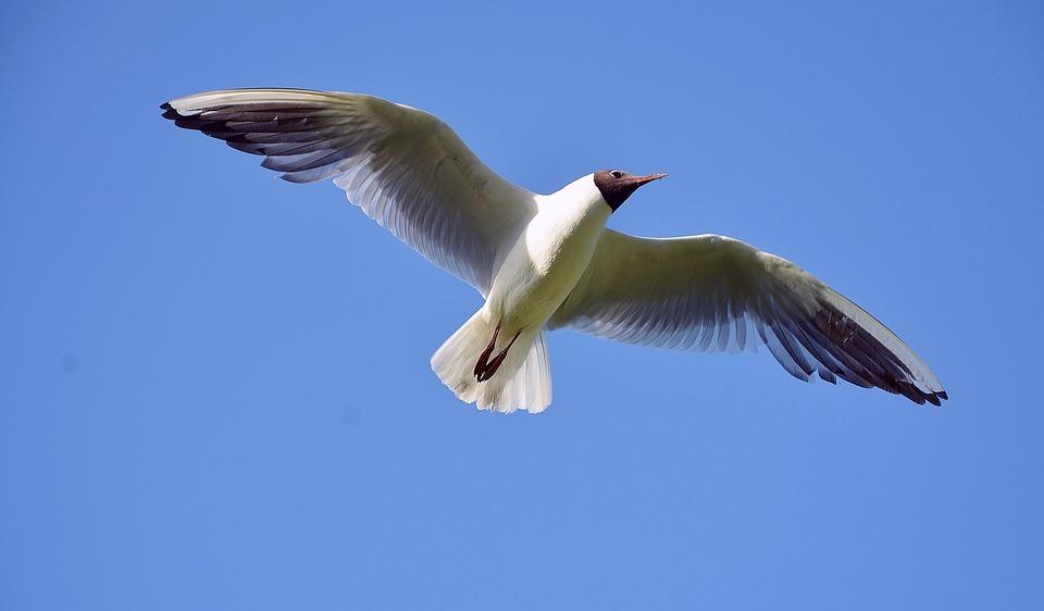 Seagull, Sea, Gull, Bird, White, Gray, Photos, Sky