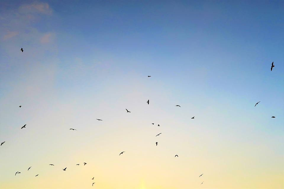 Bird, Seagull, In The Evening, Sky, Nature, Flying
