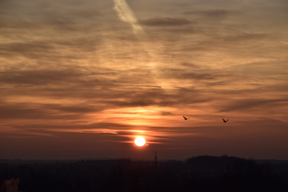 Blue Hour S, Sunrise, Birds, In The Morning, Sky