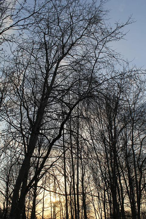 Nature, Forest, Tree, Landscape, Sky, Autumn, Konary