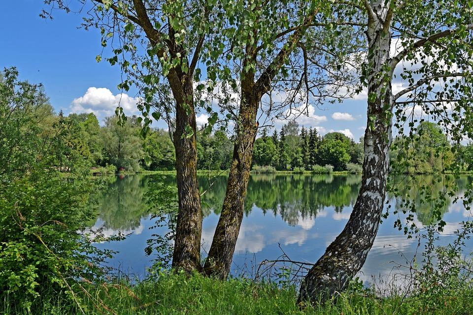 Lake, Birch, Sky, Clouds