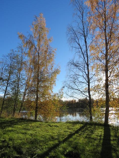 Shadow, Wood, Autumn, Fall Colors, Sky, Lake, Landscape
