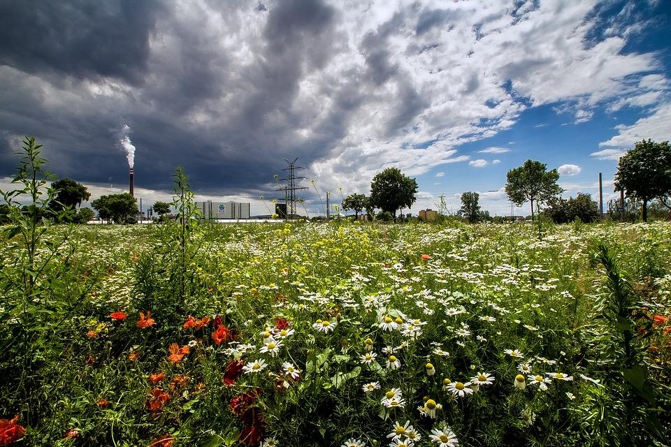 Landscape, Summer, Clouds, Flower Meadow, Sky, Land